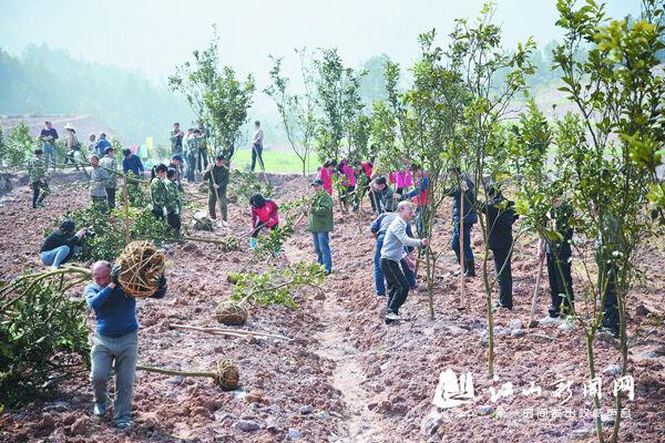 植树造林正当时