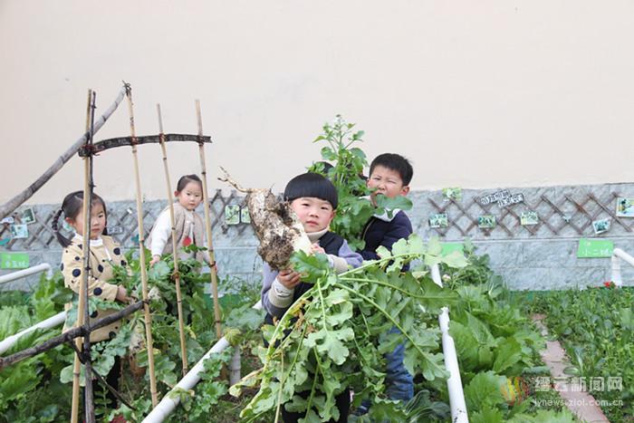种植园里拔萝卜