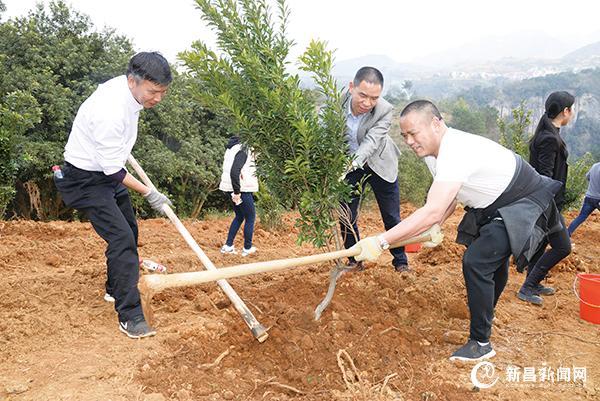 干部群众参加义务植树