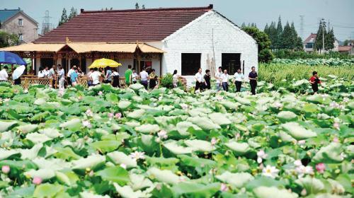 秀洲打造具有江南水乡特色的乡村振兴典范