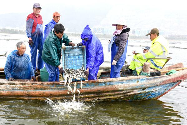 200万尾鱼苗放流 生态治水打造美丽玉环湖
