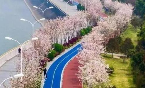 逢樹繞路 遇水搭橋 杭州綠道串起幸福時光