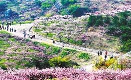浙江金東:鄉村美如畫 幸福踏歌來