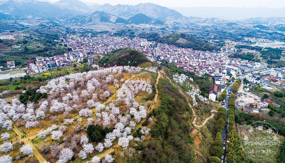 樱花盛开 风景迷人