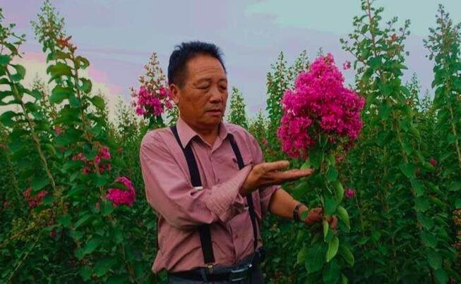 市民培植出国家级紫薇新品种