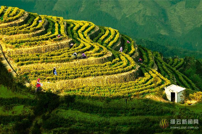 深化供给侧改革 全力激发农业发展新活力
