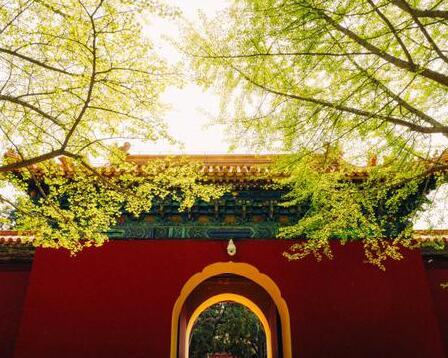 4月底的北京 这四个地方郁金香正当季