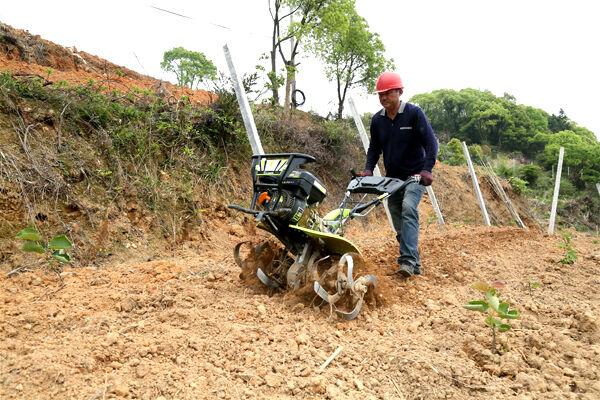 大麦屿£º荒地变果园 焕发土地新活力