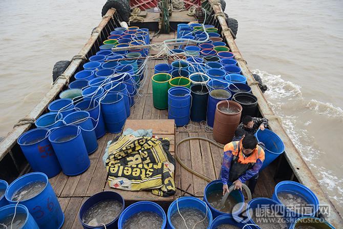 我县放流海蜇苗种3.4亿只 为渔民捕捞生产增收