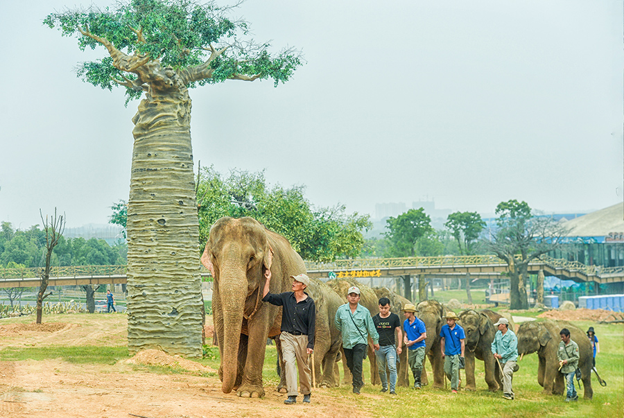 大象抵达 龙之梦下月开园