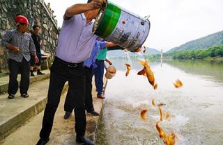 非法电鱼者投放鱼苗修复水生态