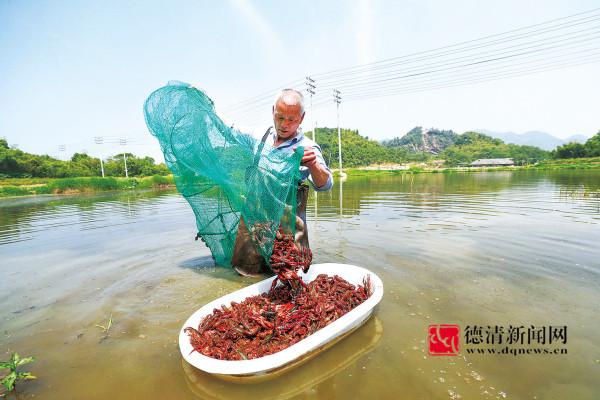 龙虾养殖助增收