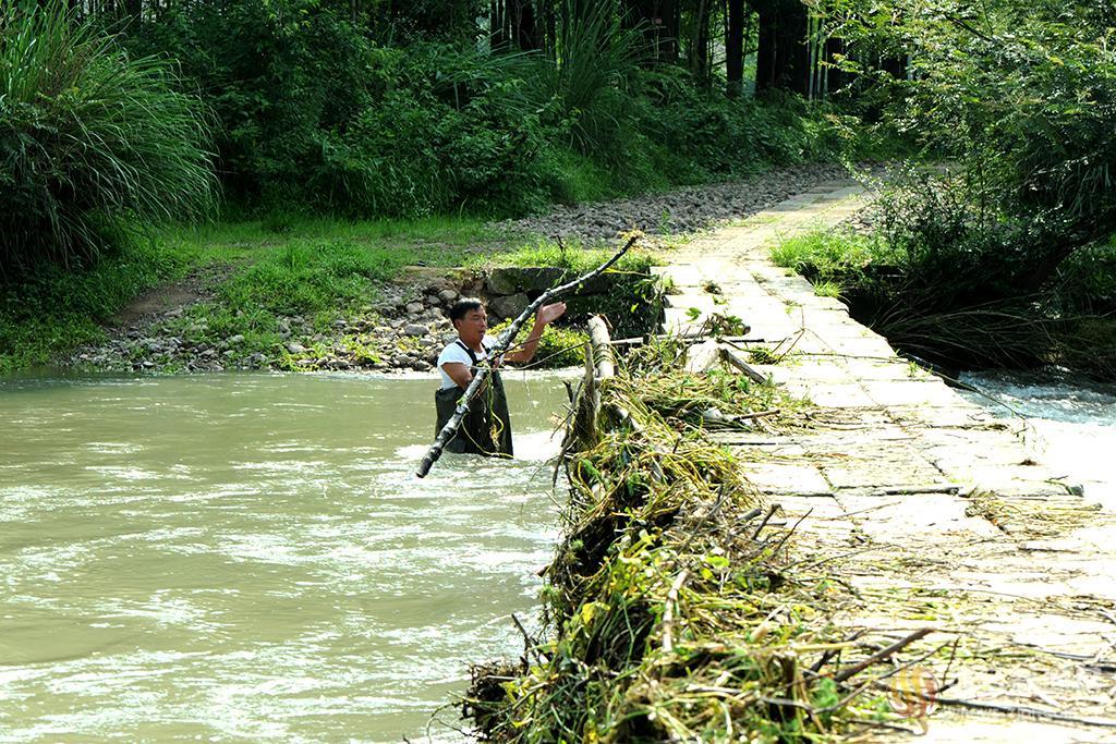 清理河道杂草树枝