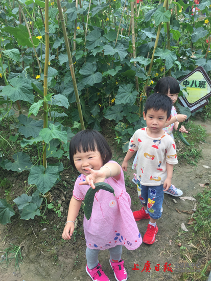 鹤琴幼儿园开设真实践课程