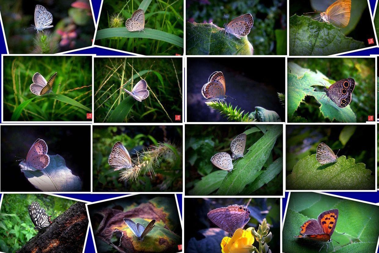 【行行摄摄】蝴蝶