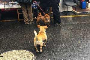 杭州近期狗傷人事件多發 文明養犬,怎么那么難?