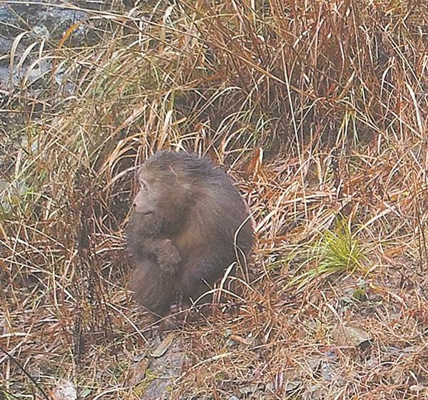 央视聚焦仙霞岭保护区黄腹角雉和藏酋猴
