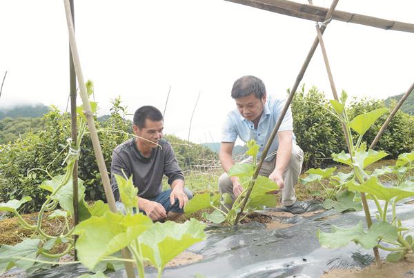 农技专家指导种植技术