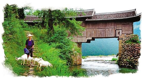 乡情归处蜈蚣桥 在泰顺,人们为何对廊桥爱得深沉