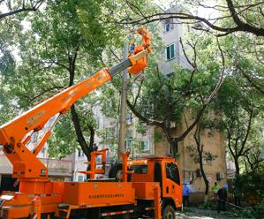 集中清理树障备战电网迎峰度夏