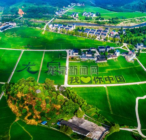 """小梅镇黄南村打造""""我爱你中国""""巨幅稻田画献礼祖国70周岁生日"""