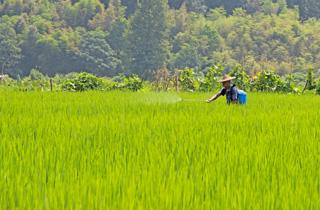 淤上乡防治水稻病虫害