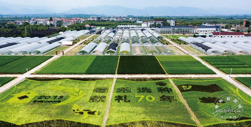 多彩稻田作画 献礼新中国成立70周年