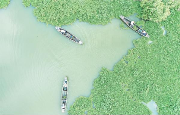 打捞水葫芦共护水环境