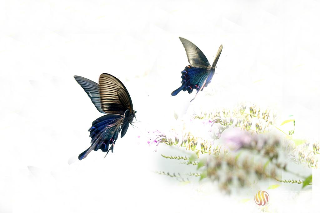 生态引蝶舞