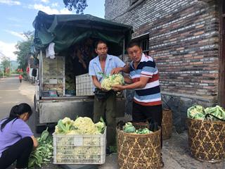 高山反季节蔬菜促农增收