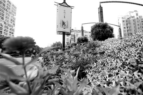鲜花扮靓节日街头