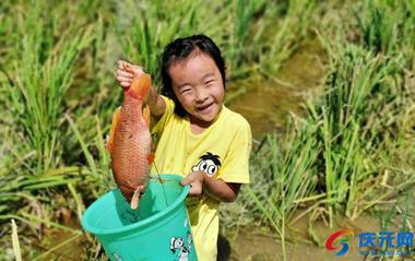光泽家庭农场第三届丰收节举行