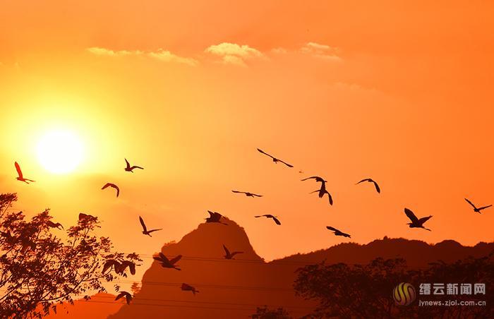 红霞映天 鸟飞翔