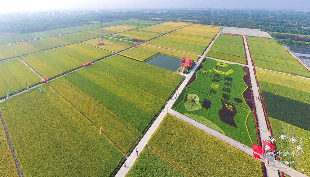 410个品种亮相水稻新品种大会