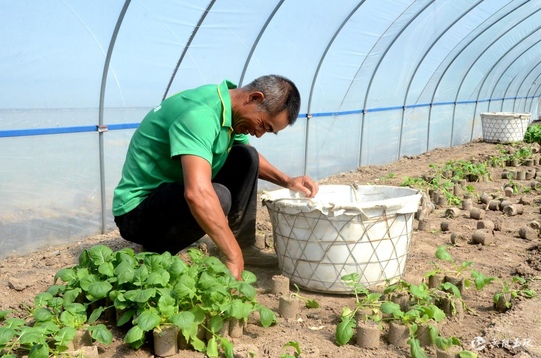 干江盘菜开始种植啦!预计12月份可上市~