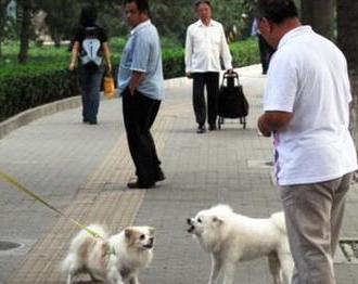 对不文明养犬行为说不£¡湖州启动新一轮犬类规范管理工作