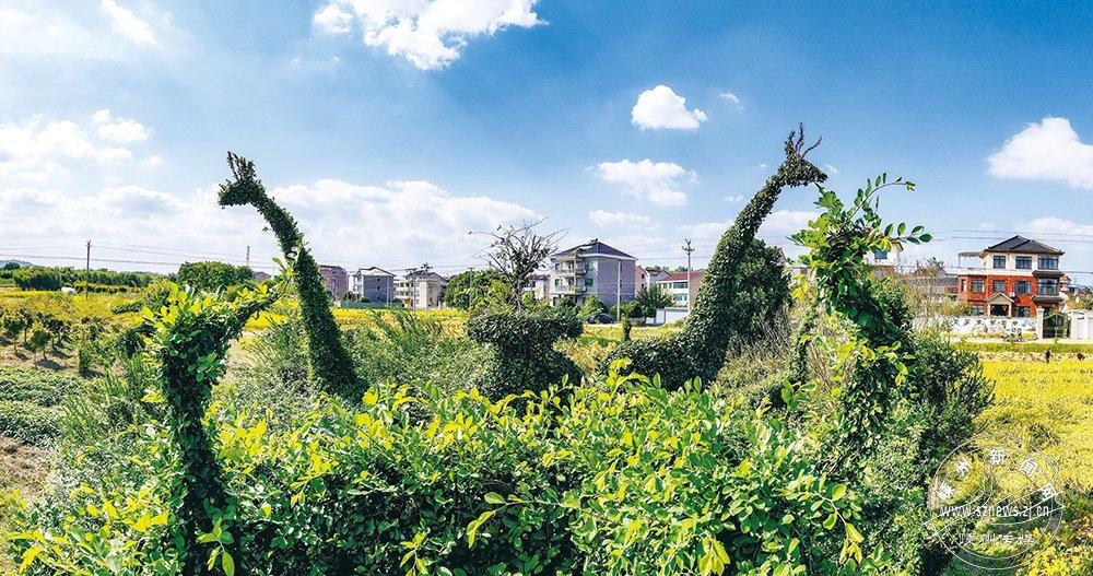"""造型栩栩如生!嵊州有个用花木""""栽出来""""的动物园"""