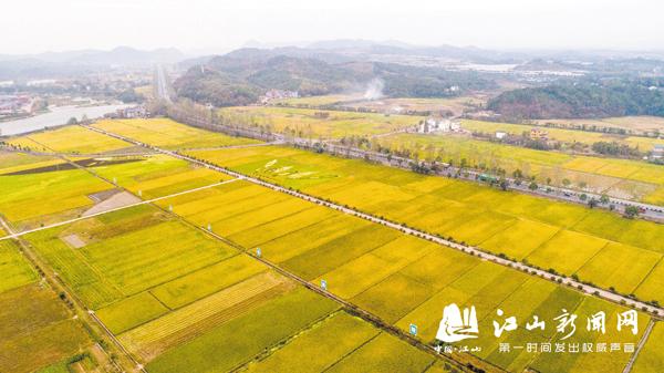 千亩稻田迎丰收
