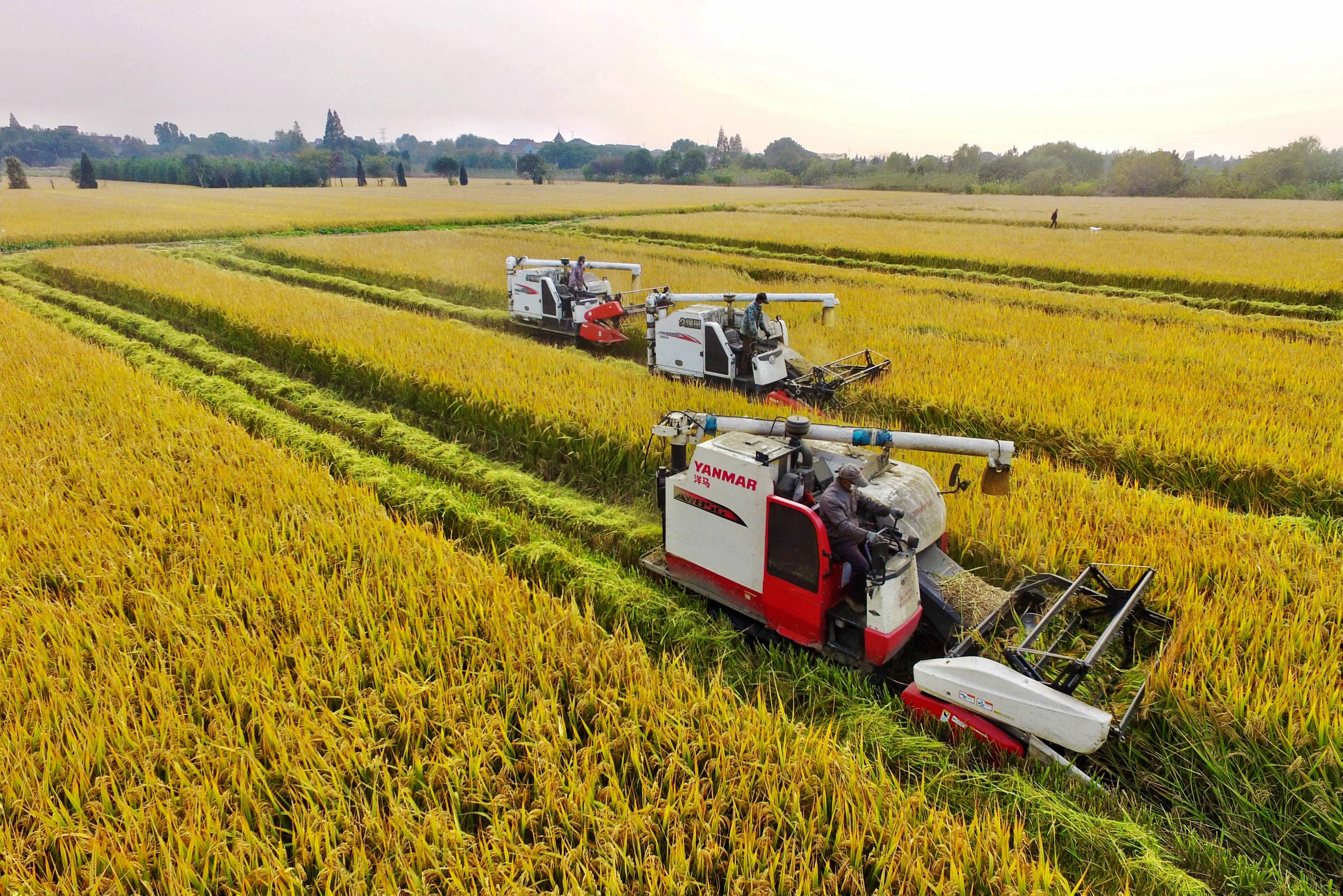 晚稻联合收割