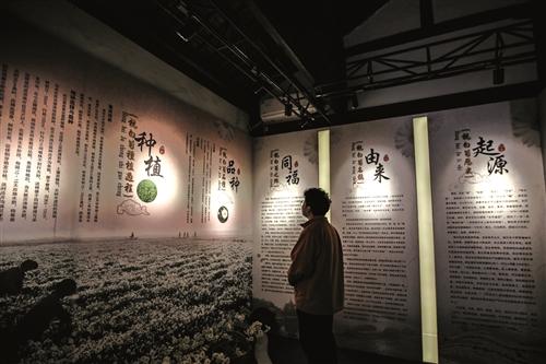 杭白菊文化展示馆