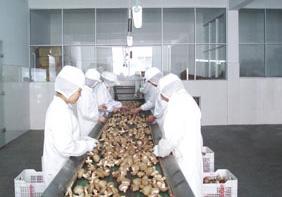 浙江三江源农业发展有限公司——将更多高品质鲜菇销往世界各地