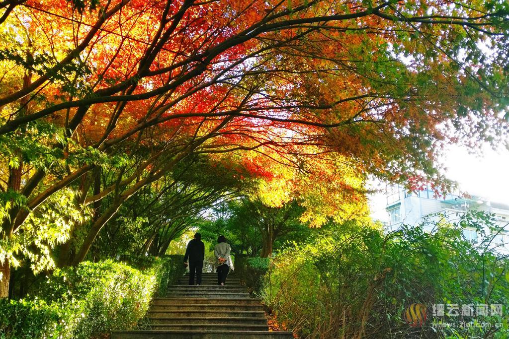 公园红枫初见红