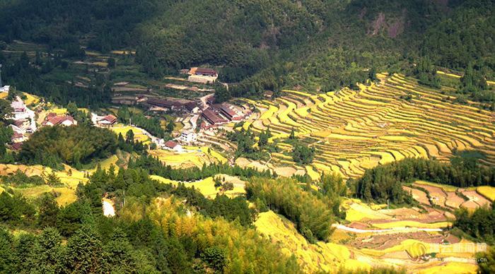 缙云:郑坑梯田 雕刻在山脊上的田园风光画