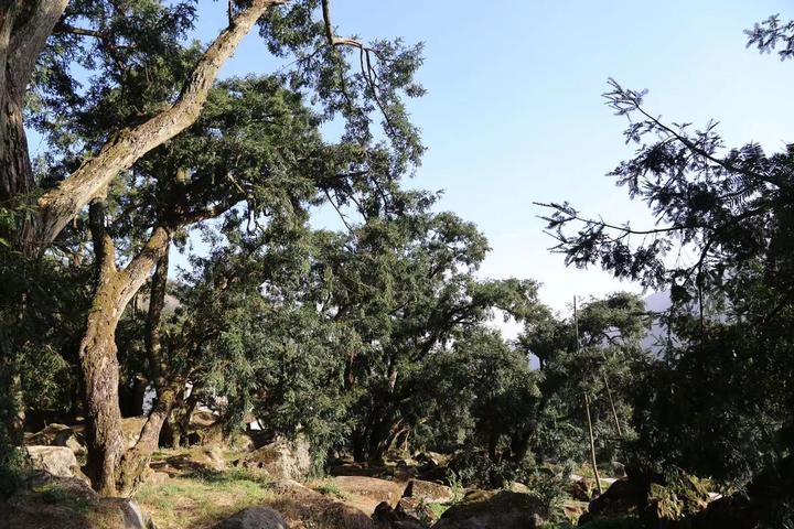 嵊州石璜开展地质森林康养节