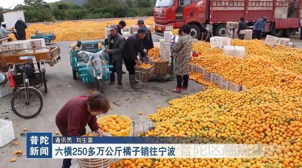 六横250多万公斤橘子销往宁波