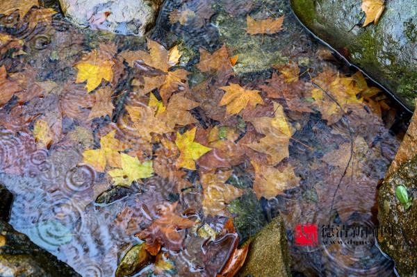 溪水落叶 也成美景