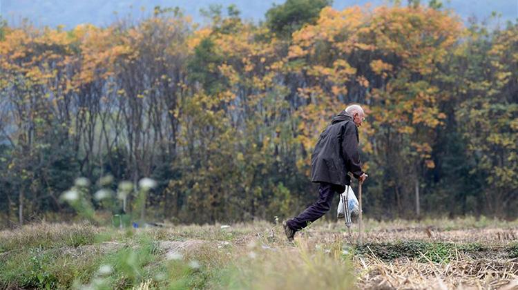 独腿老人郦礼元:从自立自强到保护环境