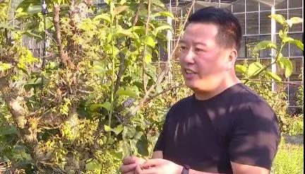 微视频丨他在龙泉种仙草