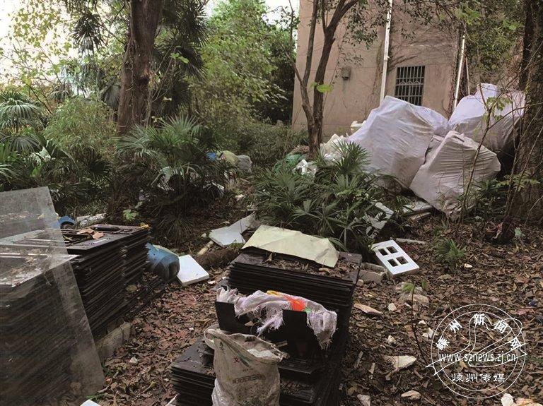 村内一块林地竟成了垃圾场