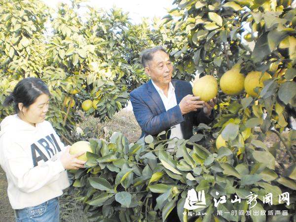 种水果促增收